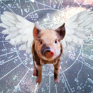 Chinese Year of the Pig Global Meditation